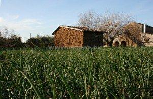 Casolare rurale in Calabria