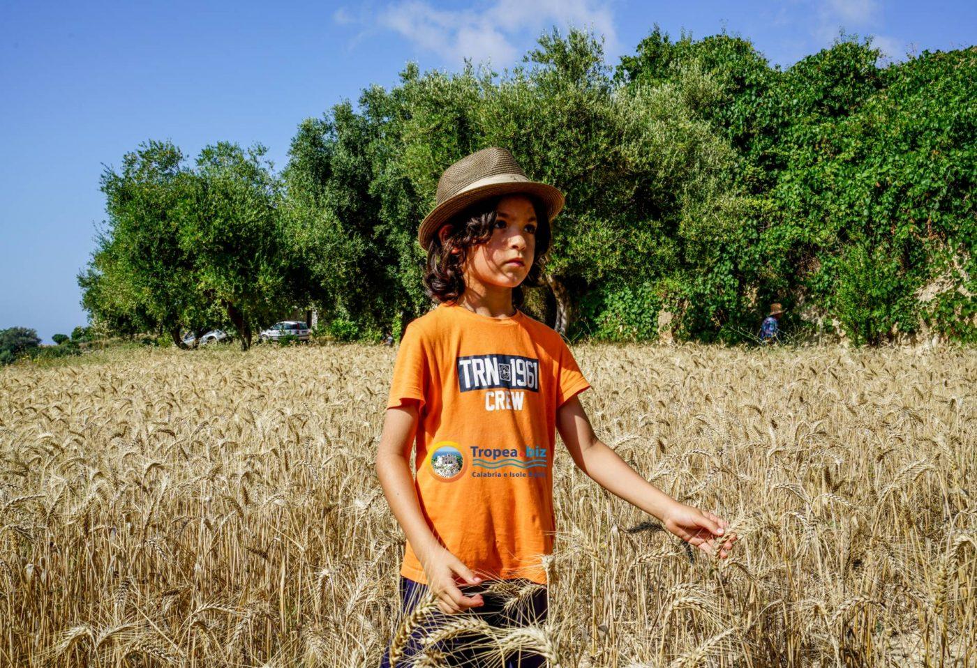 Campo di grano a Capo Vaticano